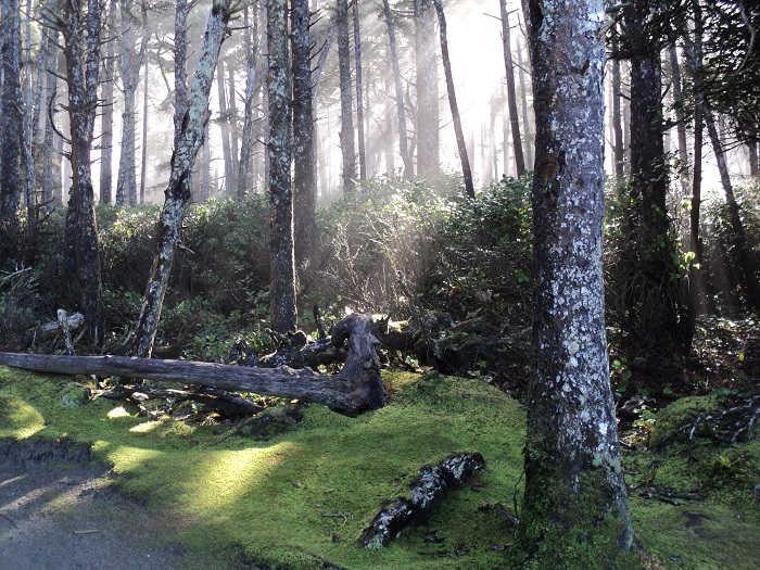 sun shining through trees in Tofino, B.C.
